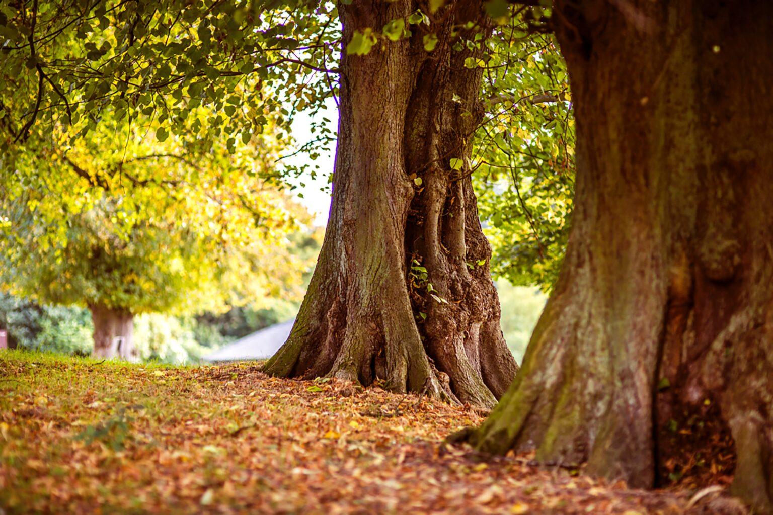 Mooiste herfstwandeling wandeling herfst