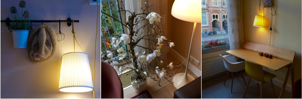 Neighbour's Magnolia2