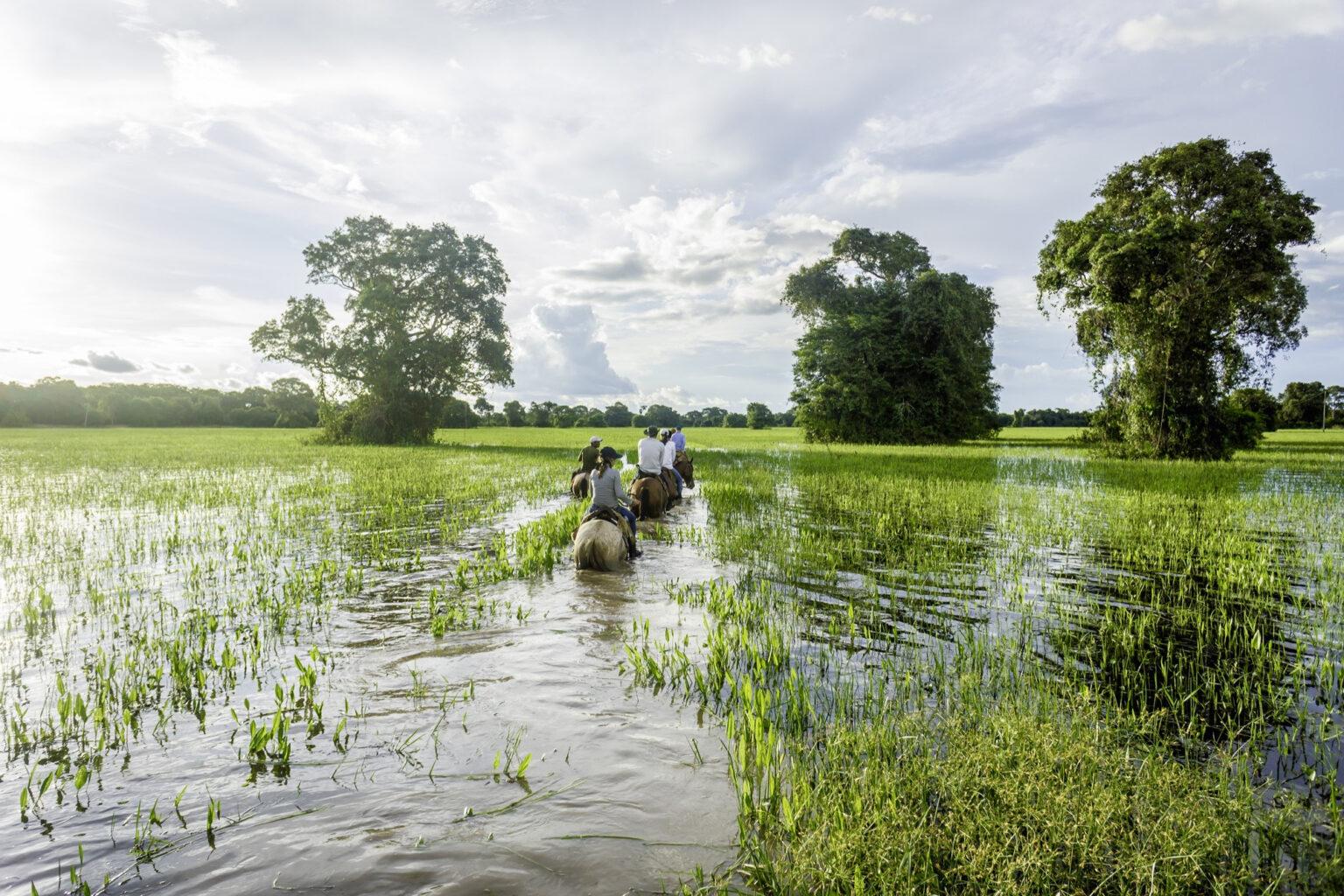 Pantanal10 - 1