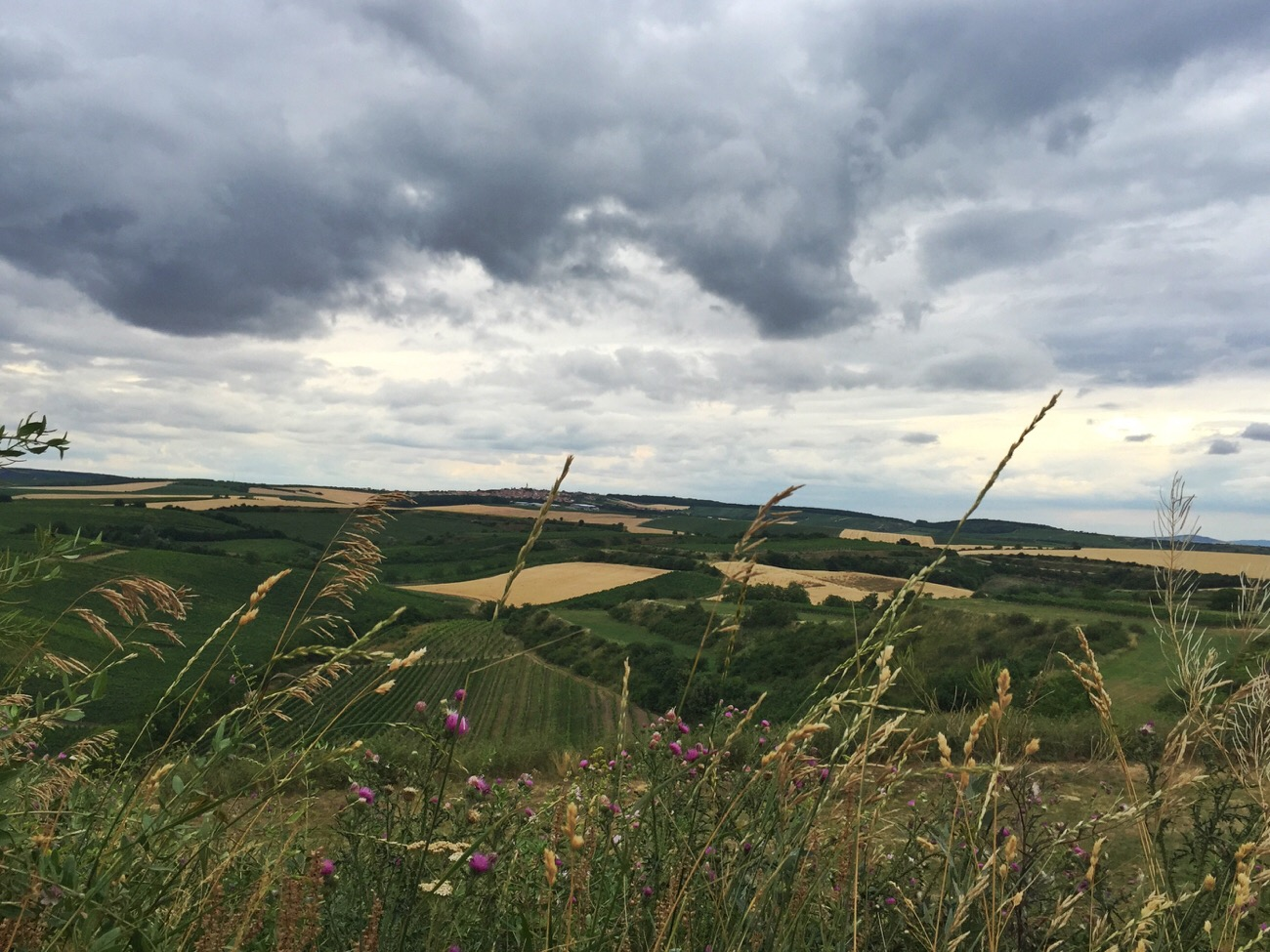 wijnvelden Moravië