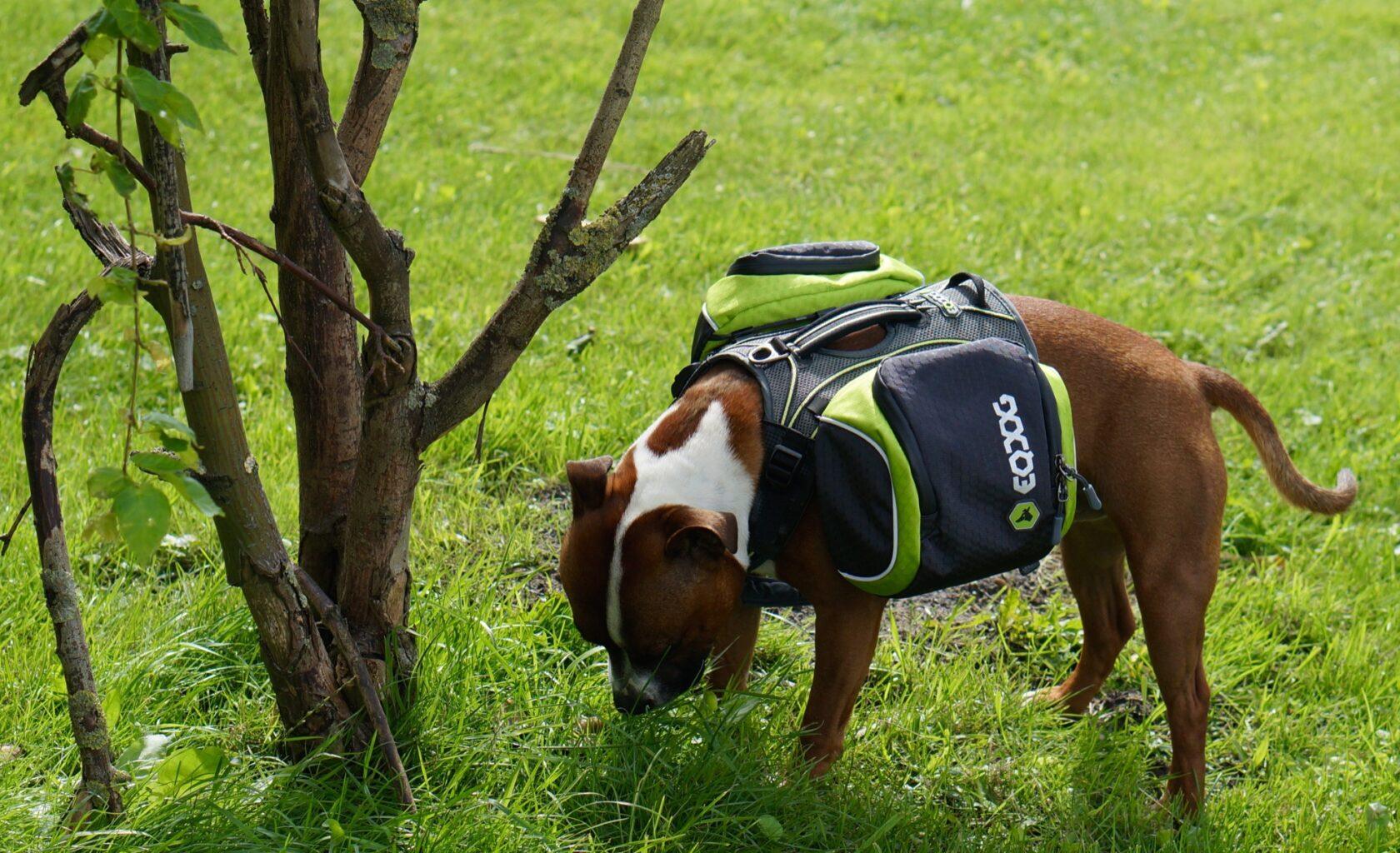 outdoor vakantie met hond