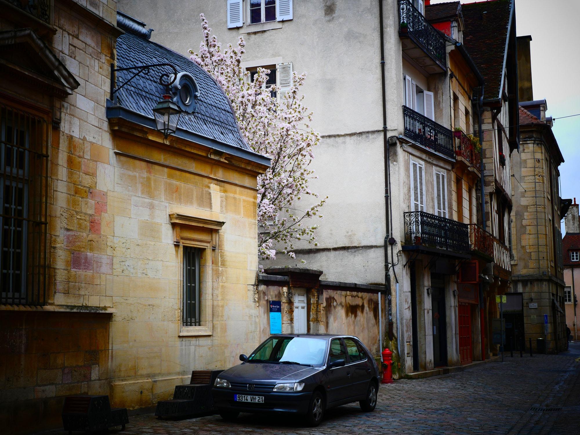 Dijon4