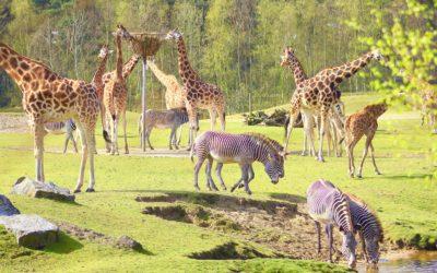 safaripark Beekse Bergen dierentuin