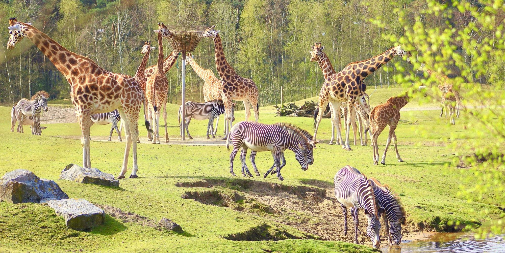 Safaripark Beekse Bergen Kortingsbonnen
