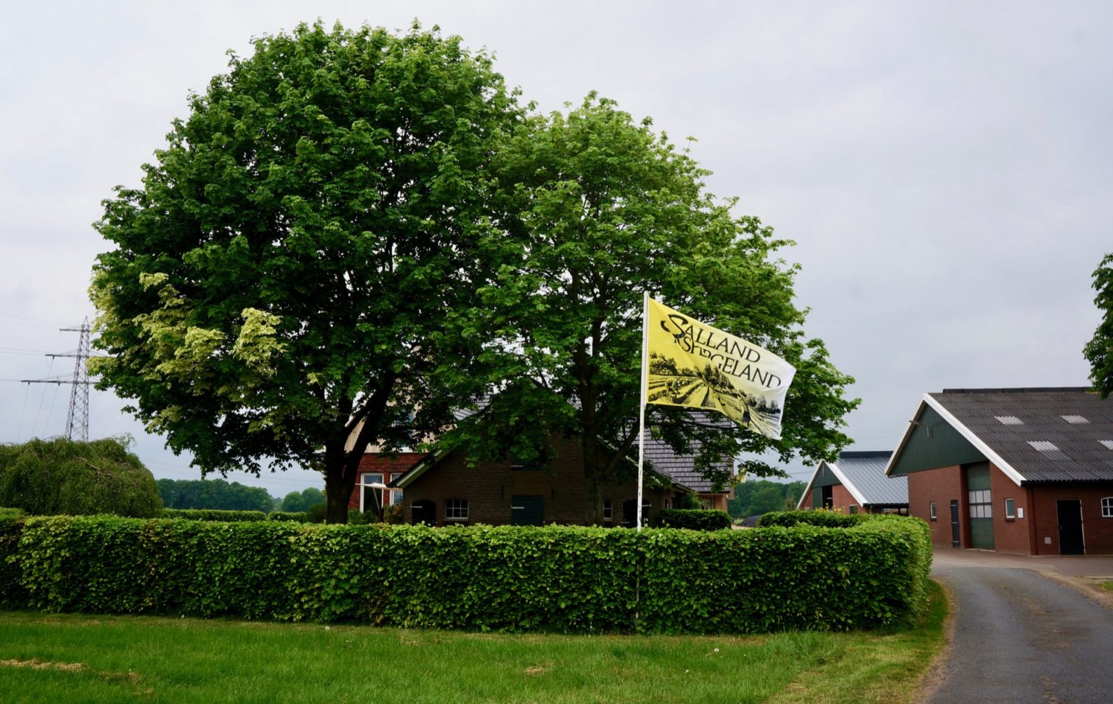 witte goud asperges asperge lekkerste Nederland Salland Sallandse Heuvelrug